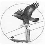 avian power lines contractor